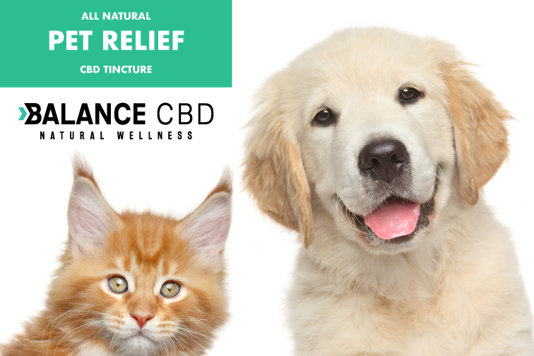 CBD oil for Pets; cats and Dogs